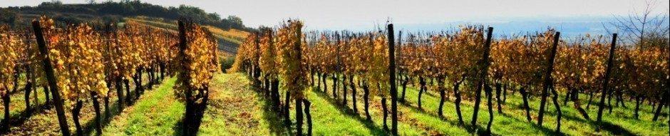 Domaine Humbrecht 1619 - Vins d&#Alsace